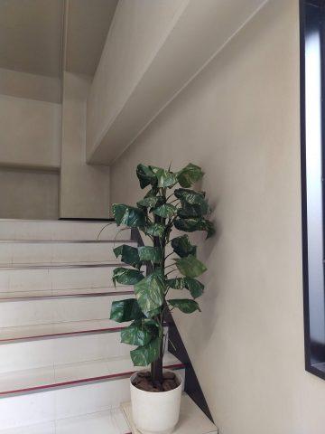 IMG 20180725 170202192 360x480 - 階段に観葉植物を置く理由がわかりますか?